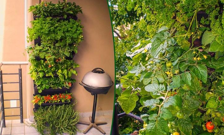Vertical Garden / Greenwall By Wallgarden Australia