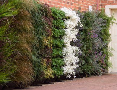 Benefits of vertical gardens brisbane local food for Wall garden system