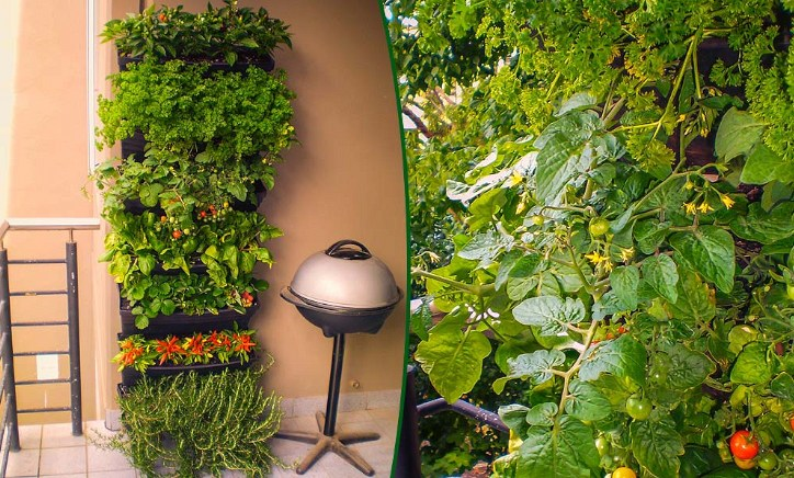 Herbs and vegetables grown in an Australian wall garden.